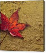 Leaf In The Rain Nature Photograph Canvas Print