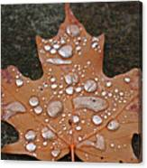 Leaf It Be Canvas Print