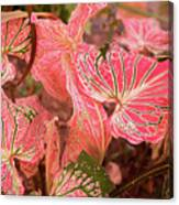 Leaf Of Color Canvas Print