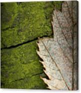 Leaf On Green Wood Canvas Print