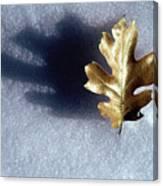 Leaf On Snow Canvas Print
