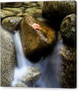 Leaf On Rock-yosemite Valley Canvas Print