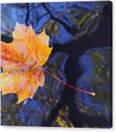 Leaf On The Water Canvas Print