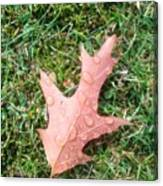 Leaf Resisting The Rain Canvas Print
