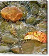 Leaf, Rock Leaf Canvas Print