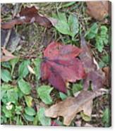 Leaf Standing Out In A Crowd Canvas Print