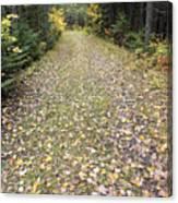 Leaf-strewn Trail Canvas Print