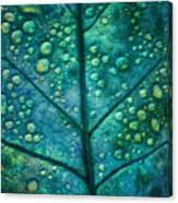 Leaf Study #4 Canvas Print