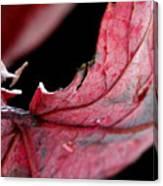 Leaf Study I Canvas Print