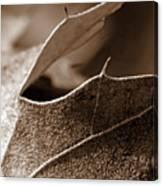 Leaf Study In Sepia II Canvas Print
