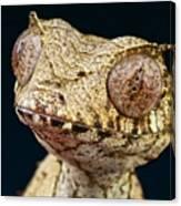 Leaf-tailed Gecko Canvas Print