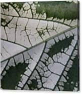 Leaf Variegated 1 Canvas Print