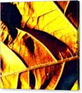 Leaf Veins Abstract Canvas Print