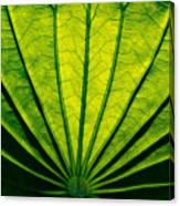 Leaf Veins Canvas Print