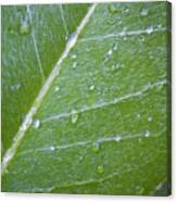 Leaf With Water Droplets Canvas Print