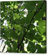 Leaf Xray Canvas Print