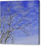Leafless Canvas Print