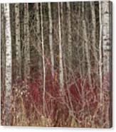 Leafless Color Canvas Print