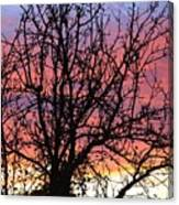 Leafless Silhouette Canvas Print