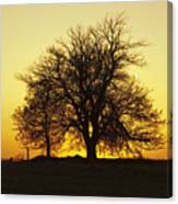 Leafless Tree Against Sunset Sky Canvas Print