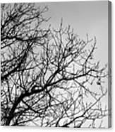 Leafless Twig Canvas Print