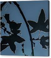 Leafs Backlit Canvas Print