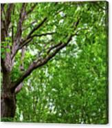 Leafy Canopy Canvas Print