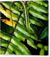 Leafy Lizard Canvas Print