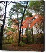 Leafy Pathway Canvas Print