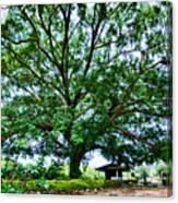 Leafy Tree Canvas Print