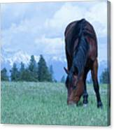 Leaning Horse Canvas Print