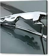 Leaping Jaguar Canvas Print