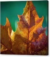 Leaves 971 Canvas Print
