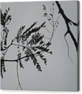 Leaves Against A Grey Sky Canvas Print