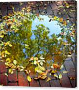 Leaves And A Puddle Canvas Print