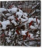 Leaves And Powery Snow Canvas Print