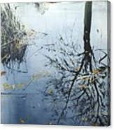 Leaves And Reeds On Tree Reflection Canvas Print