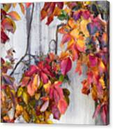 Leaves And Vines Canvas Print