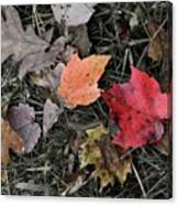 Leaves Are Falling Canvas Print