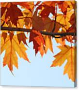 Leaves Autumn Orange Sunlit Fall Leaves Blue Sky Baslee Troutman Canvas Print