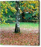 Leaves Blowing Off The Autumn Tree Canvas Print