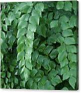 Leaves Cascading Canvas Print