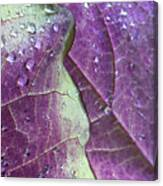 Leaves, Color,  And Dew Canvas Print