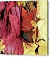 Leaves Fall Canvas Print