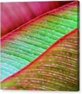 Leaves In Color  Canvas Print