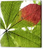 Leaves. Canvas Print