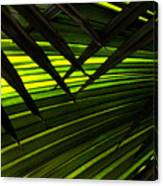Leaves Of Palm Color Canvas Print