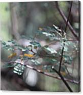 Leaves of the Forest Canvas Print