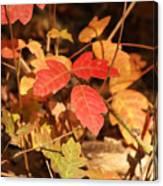 Leaves Of Three Canvas Print