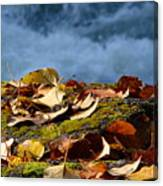 Leaves On Rock By River Canvas Print